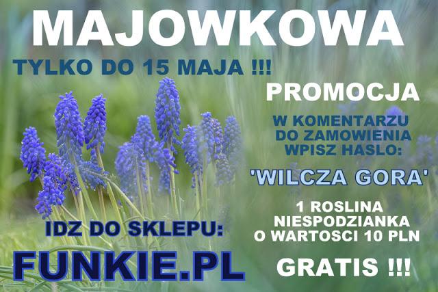 www.funkie.pl